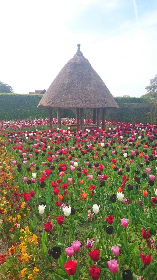 Arundel castle tulip fields