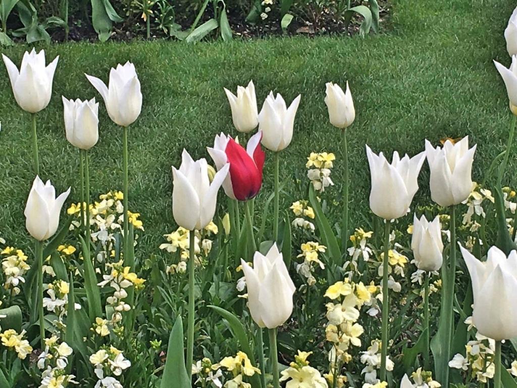Замък - градини лалета