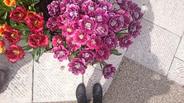 arundel-tulips