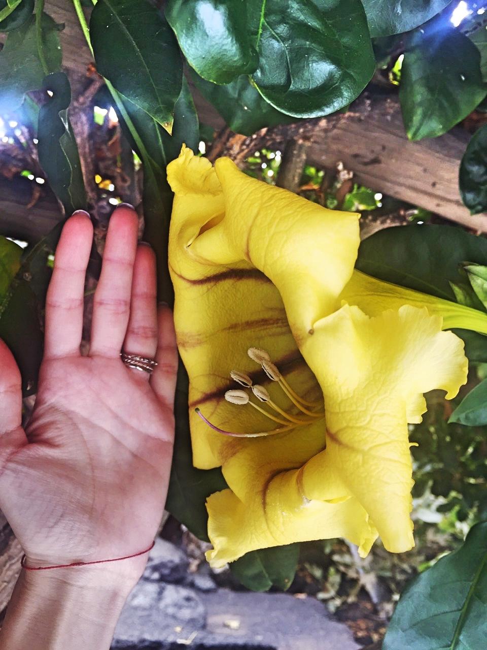 Plants in Lanzarote Canary Islands