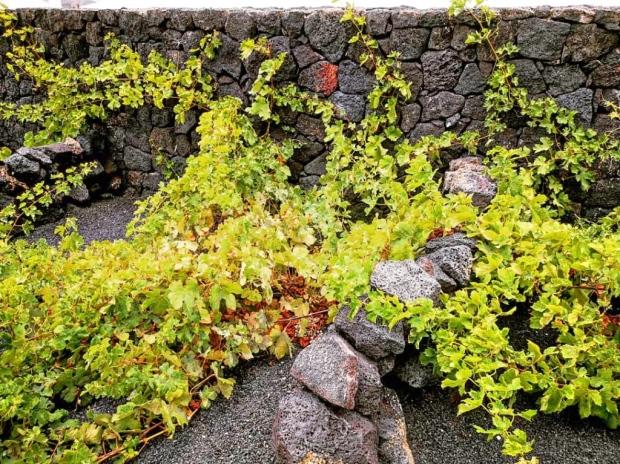 Top 10 best wineries in Lanzarote, Canary Islands