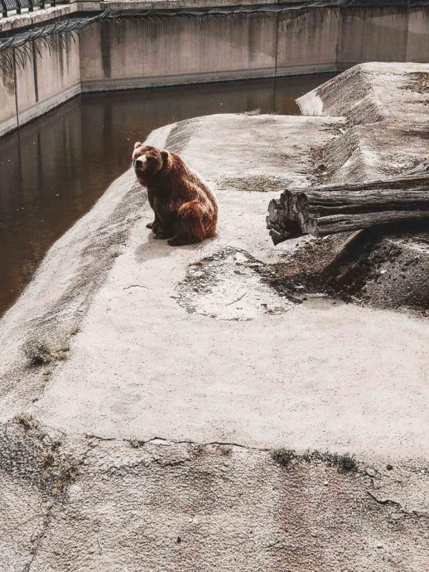 Мечката Вероника в Зоологическата градина в София