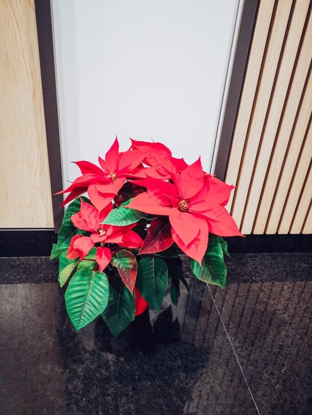 Еко подаръци за Коледа